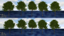 gamedev:tree_lod_with_canopy_lod.png
